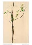 Egon Schiele - Young Tree - Koleksiyonluk Baskılar