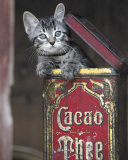 Kitten in Box Posters by Hubert