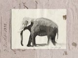 The Elephant Poster by Marc Lacaze