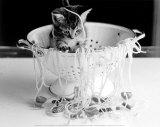Kitten in Spaghetti Posters