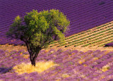 Provence Scene Prints by Alain Christof