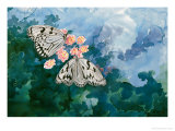 Spotted Butterfly Giclee Print by Chen Kwodong