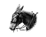 Work Mule  2 Photographic Print by Marlene Barrett