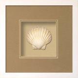 Irish Deep Shell (Beachcomber Collection) Dimensional Product