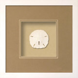 Sand Dollar (Beachcomber Collection) Dimensional Product