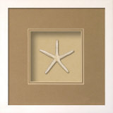 Starfish (Beachcomber Collection) Dimensional Product