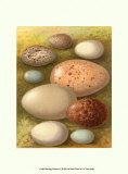 Bird Egg Collection IV Art