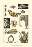 Nature's Curio I Posters