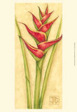Red Heliconia Lminas por Jennifer Goldberger