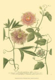 Passion Flower II Posters by Johann Wilhelm Weinmann