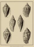 Shells on Khaki XII Posters par Denis Diderot