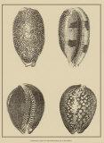 Shells on Khaki VI Posters par Denis Diderot