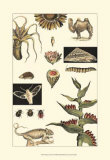 Nature's Curio III Posters