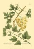 Grapes II Posters by Johann Wilhelm Weinmann