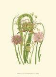 Summer Garden VI Prints by Anne Pratt