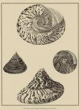 Shells on Khaki VIII Poster par Denis Diderot
