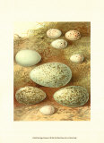 Bird Egg Collection II Prints
