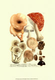 Mushrooms I Prints by Johann Wilhelm Weinmann