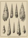 Shells on Khaki IX Affiches par Denis Diderot