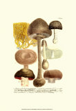 Mushrooms II Posters by Johann Wilhelm Weinmann