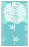 Efflorescence II Posters