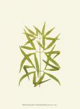 Woodland Ferns I Prints by Edward Lowe