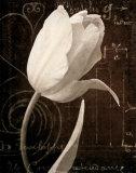 Garden Architecture I Poster von Amy Melious