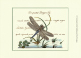 Antique Dragonfly II Prints