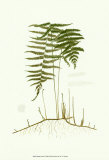 Spring Ferns III Prints by J.h. Emerton