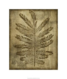 Sepia Drenched Fern I Limited Edition by Nancy Slocum