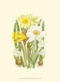 Summer Garden I Prints by Anne Pratt