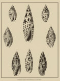 Shells on Khaki IV Posters by Denis Diderot