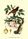 Bird in Nature IV Print by E. Guerin