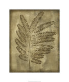 Sepia Drenched Fern II Limited Edition by Nancy Slocum