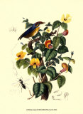 Bird in Nature II Poster by E. Guerin