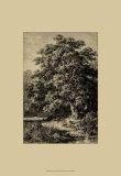 Oak Tree Plakat autor Ernst Heyn