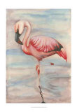 Pink Flamingo II Posters by Jennifer Goldberger