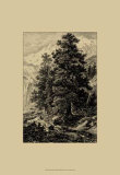 Arolla Pine Posters by Ernst Heyn