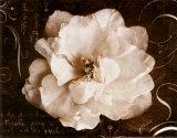 Garden Journal II Kunstdrucke von Amy Melious