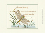 Antique Dragonfly I Print