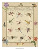 Dragonfly Manuscript II Giclee Print by Jaggu Prasad