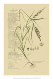 Ornamental Grasses I Giclee Print by A. Descubes