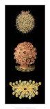 Kaleidoscope Anemone IV Giclée-tryk