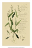 Ornamental Grasses IV Poster par A. Descubes