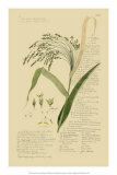 Ornamental Grasses V Giclee Print by A. Descubes