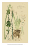 Ornamental Grasses VI Giclee Print by A. Descubes