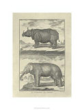 Elephant and Rhino Premium Giclee Print by Denis Diderot