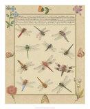 Dragonfly Manuscript I Giclee Print by Jaggu Prasad