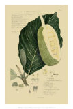 Tropical Fruits IV Giclee Print by A. Descubes