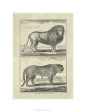 Lion and Tiger Premium Giclee Print by Denis Diderot